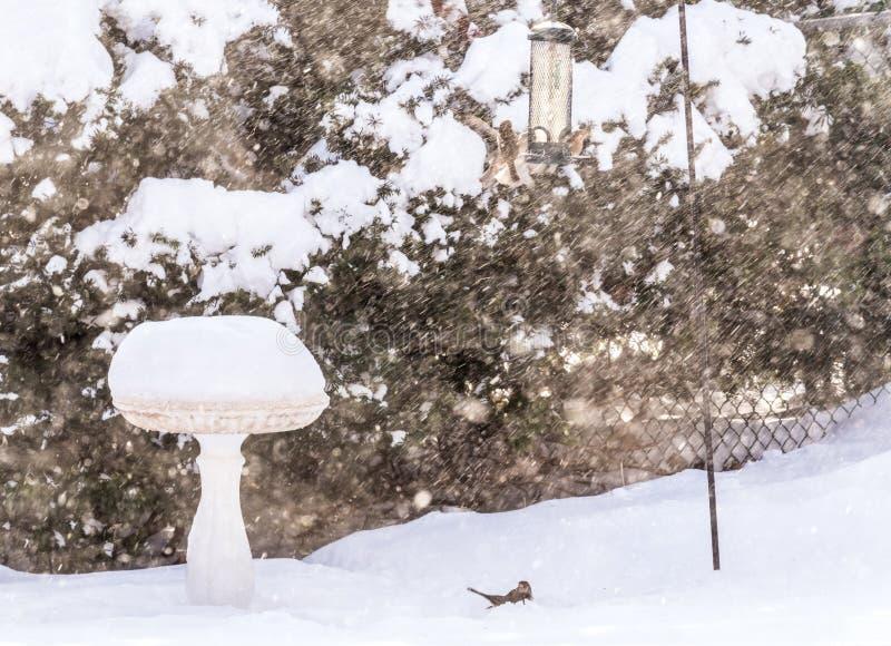 Fåglar på fågelförlagematare, i att blåsa snö, stormar, fågelbadet mycket av snoen royaltyfria foton