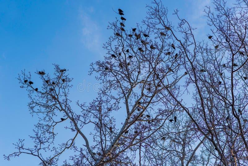 Fåglar på filialer under blå himmel arkivfoton