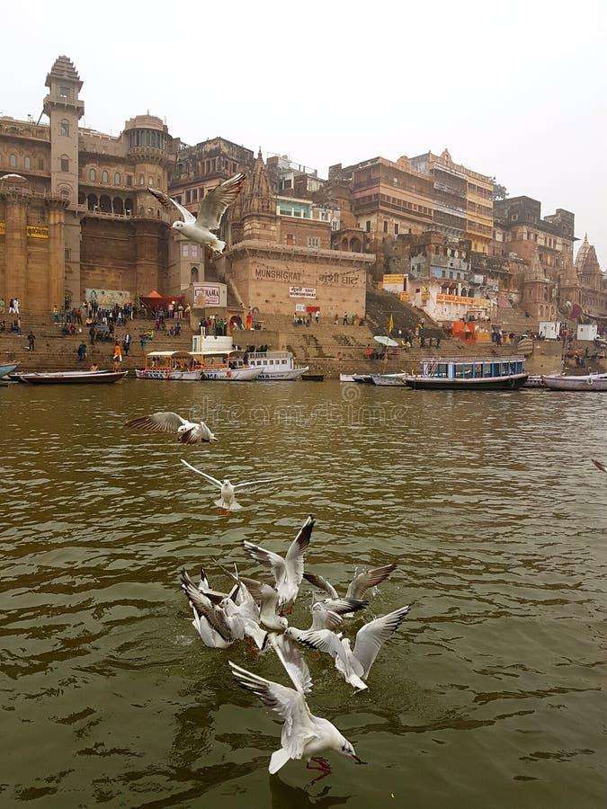 Fåglar på Ganges arkivfoto