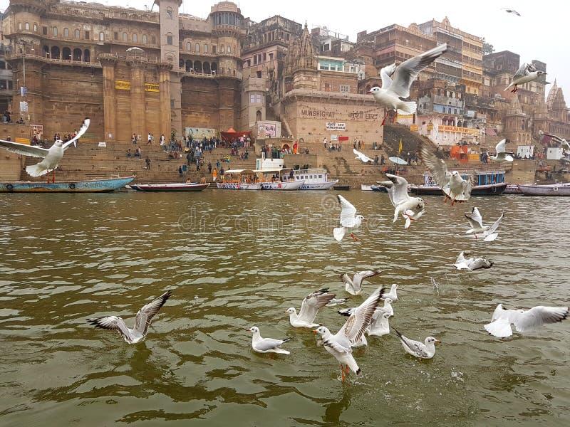 Fåglar på Ganges royaltyfri fotografi