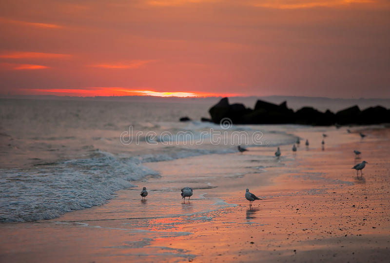 Fåglar på havet royaltyfri bild
