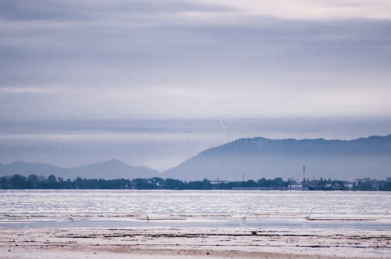 Fåglar på stranden på låg tide arkivbild