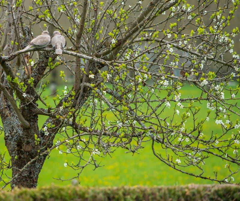 Fåglar på träd arkivfoto