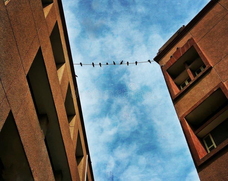 Fåglar på tråd arkivfoton