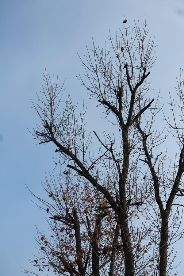 Fåglar på tree royaltyfri foto