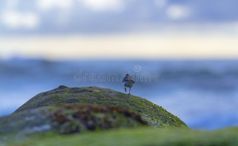 Fåglar på vagga royaltyfria bilder