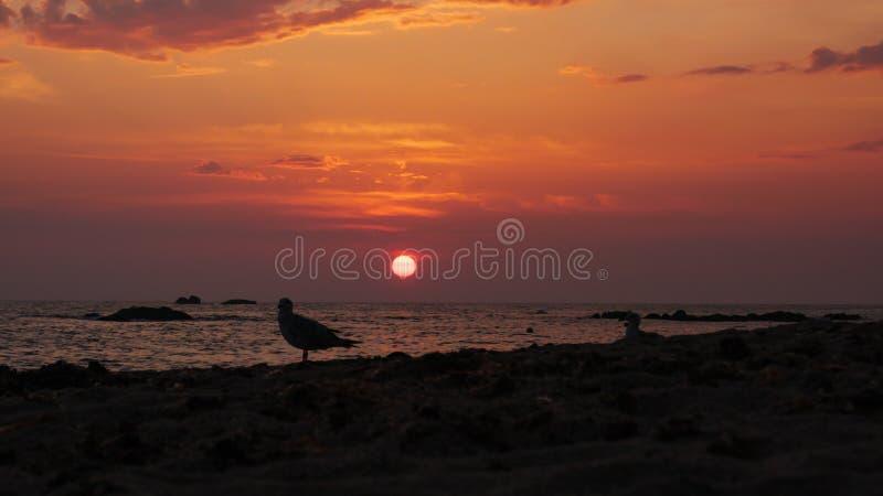 Fåglar ser ut över havet på solnedgången på stranden i kontur arkivfoto