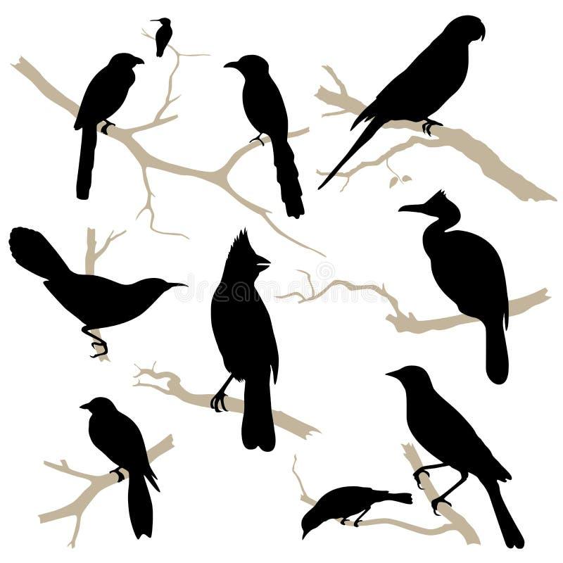 Fåglar silhouette seten. Vektor. vektor illustrationer