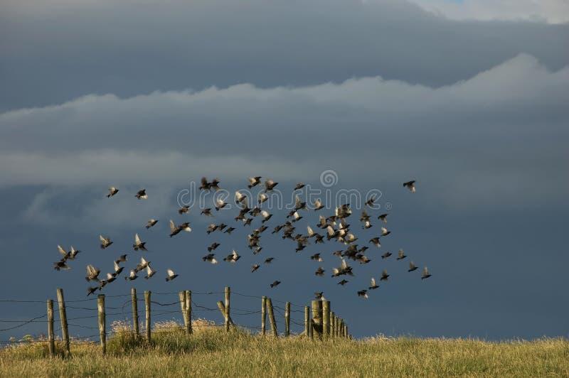 fåglar sjunga i kör staketflygängen arkivbilder