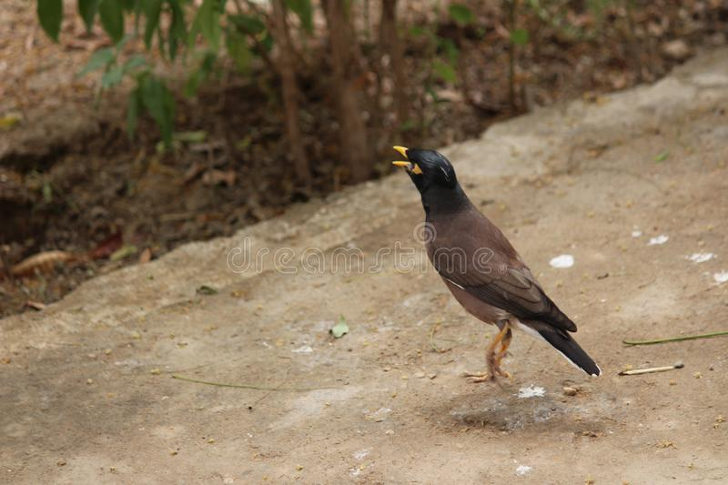 Fåglar slås royaltyfri bild