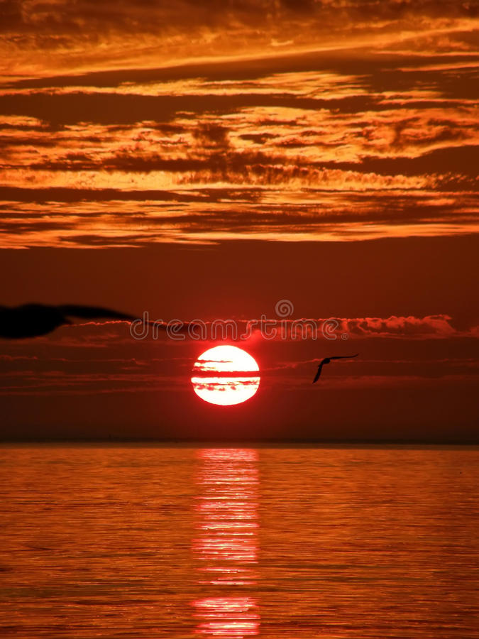 Fåglar solnedgång, hav 1 royaltyfri fotografi