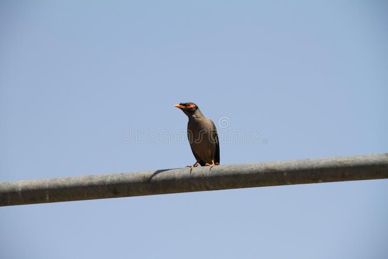 Fåglar som är klara att flyga i luft royaltyfri foto