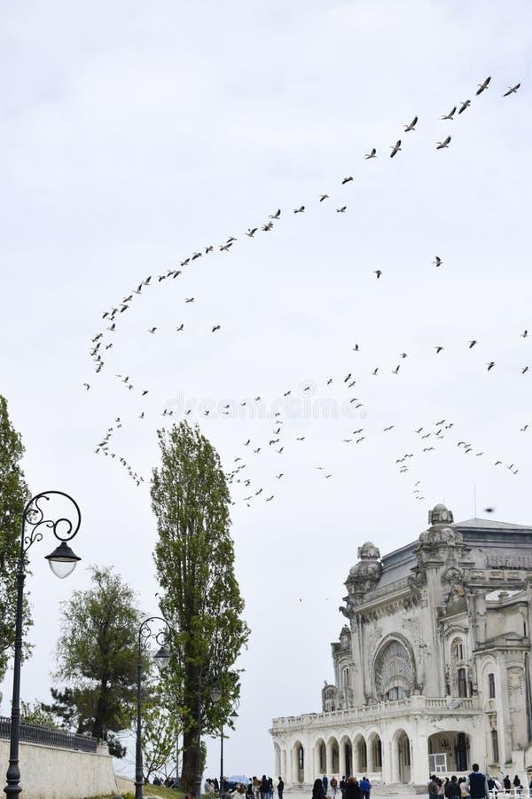 Fåglar som flyger över den Constanta kasinot royaltyfri fotografi