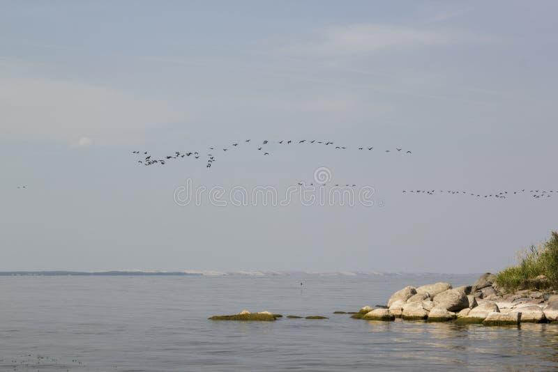 Fåglar som flyger över sjögångarna/hav arkivbilder