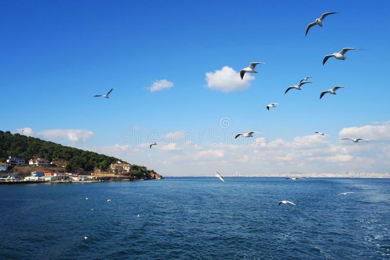 Fåglar som flyger över vatten royaltyfria bilder