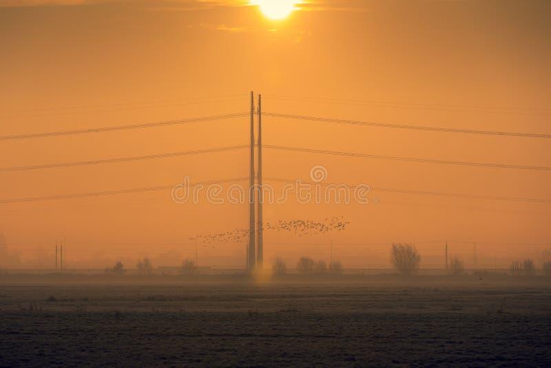 Fåglar som flyger framför höga elstolpar på en dimmig morgon royaltyfri fotografi