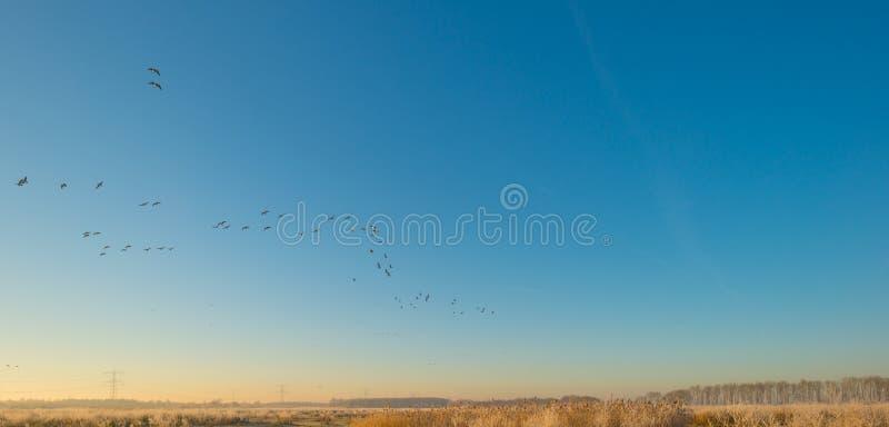 Fåglar som flyger i en blå himmel i solljus royaltyfri bild