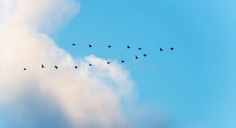 Fåglar som flyger i en blå molnig himmel royaltyfri fotografi