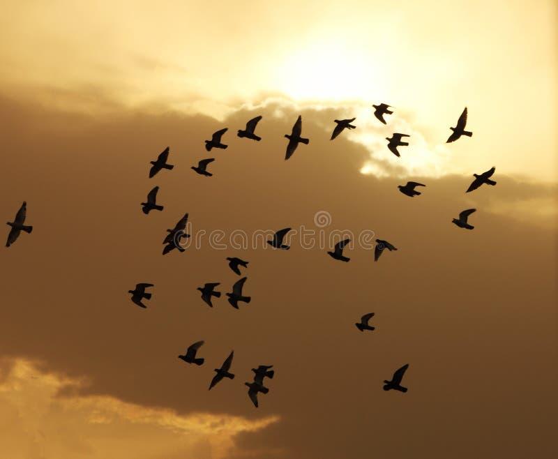 Fåglar som flyger i himlen under solnedgång royaltyfria foton