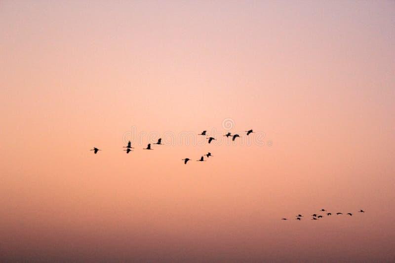 Fåglar som flyger i modell - 3 royaltyfria foton