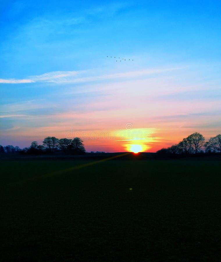 Fåglar som flyger i varm solnedgång royaltyfria bilder