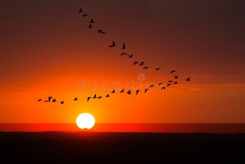 Fåglar som flyger, natur, soluppgång, solnedgång royaltyfria foton