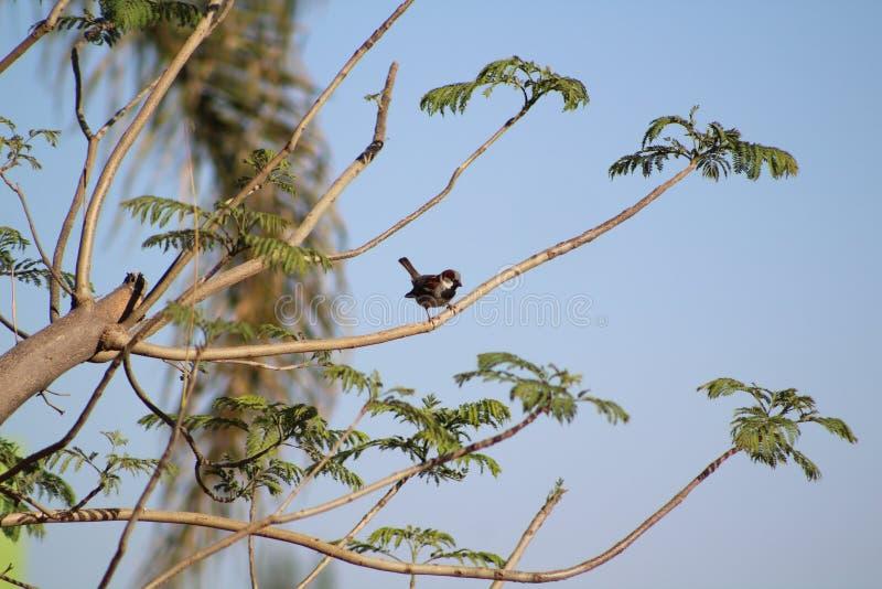 Fåglar som flyger runt om träden arkivbilder
