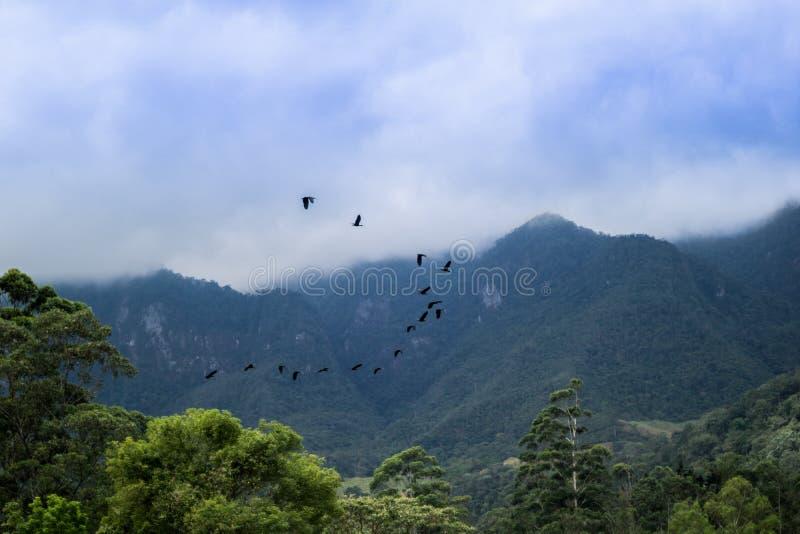 Fåglar som fritt flyger i natur arkivbilder