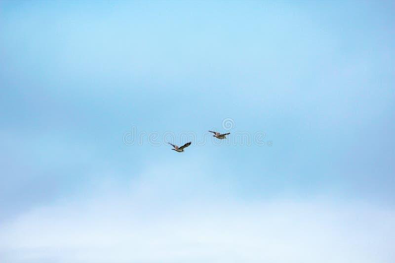 Fåglar som högt flyger i himlen arkivbild