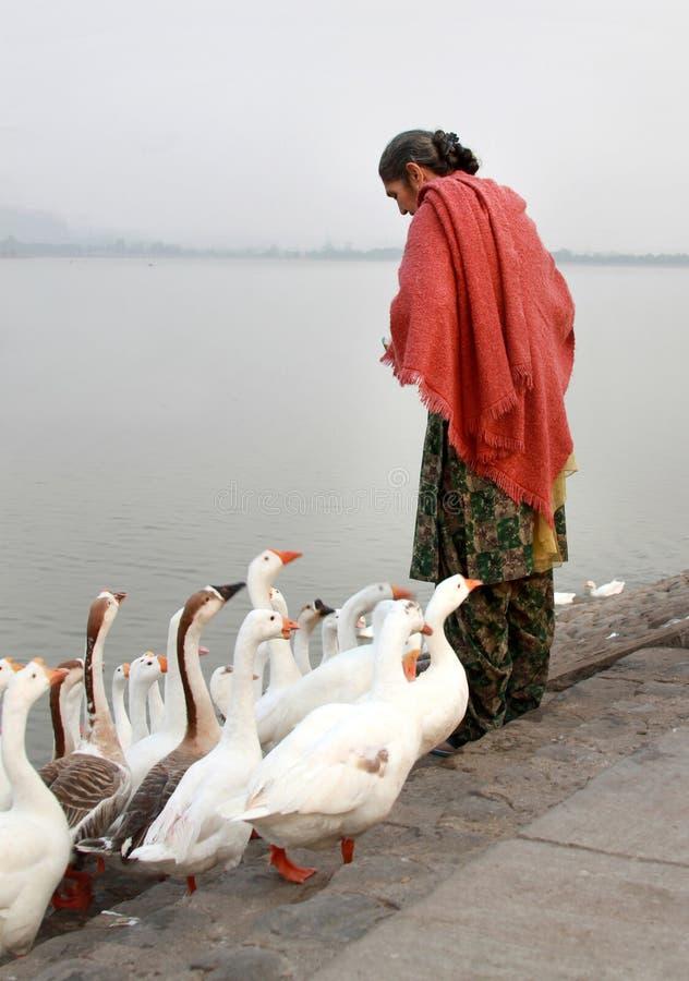 fåglar som matar ladyen royaltyfri fotografi