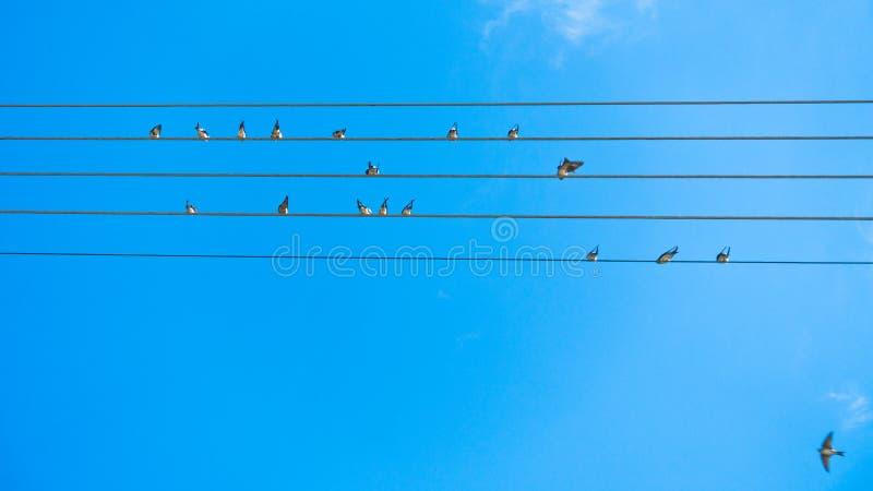 Fåglar som sjunger och bildar musik, trimmar på kraftledningar i Sithonia arkivfoton