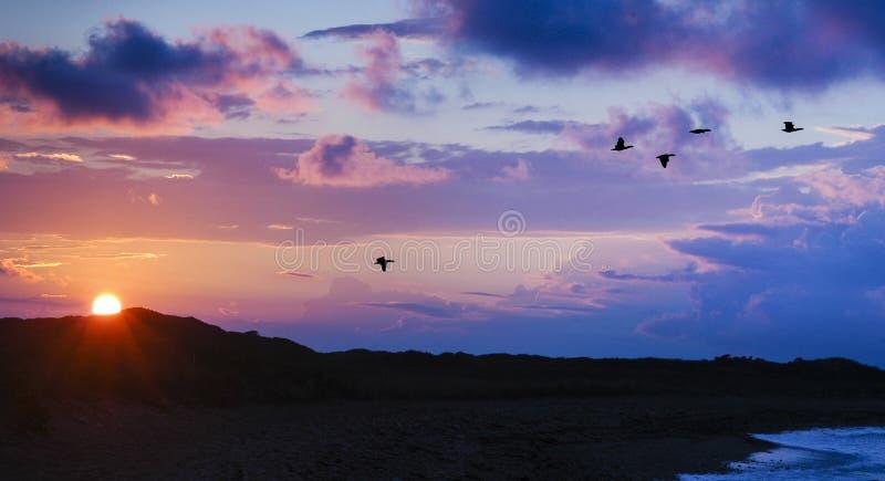 Fåglar som vandrar förbi berg, medan solen ställer in royaltyfri foto