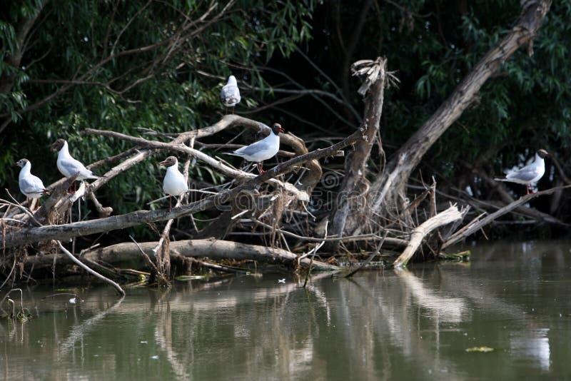 Fåglar som vilar på få filialer arkivbilder