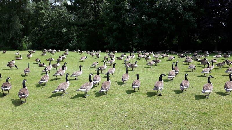 Fåglarna! royaltyfria foton