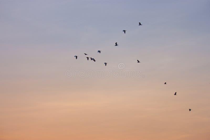 Fåglarna flyger himlarna som är härliga royaltyfria bilder