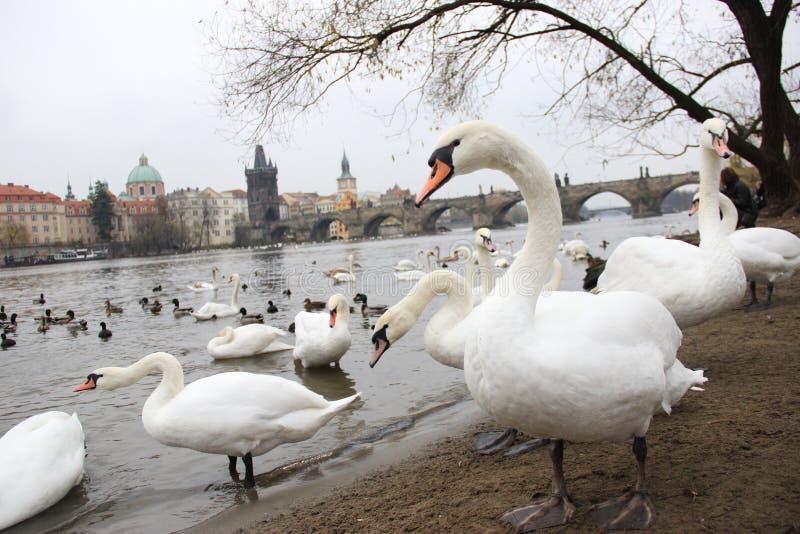 Fåglarna i hösten i Prague royaltyfri bild