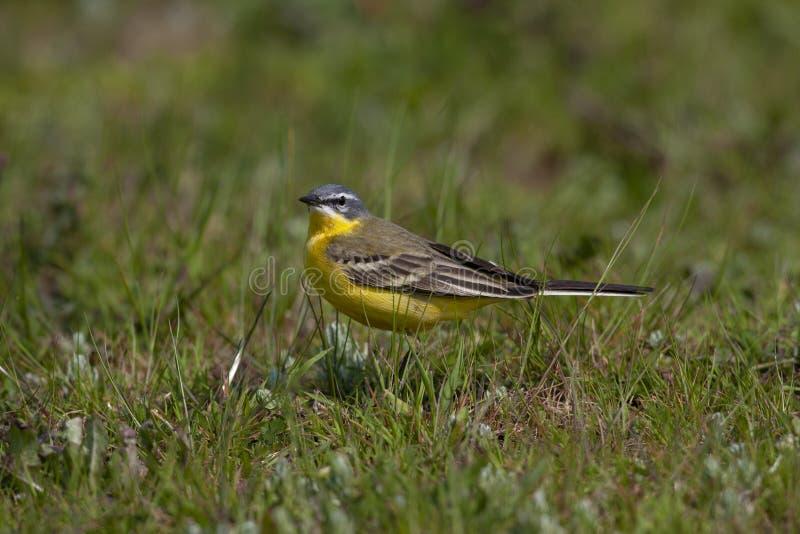 Fåglarna i naturen royaltyfria foton