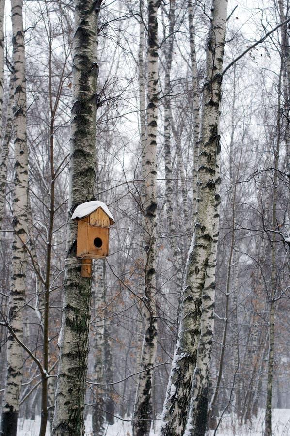 Fåglars hus på björken i vinter royaltyfria bilder