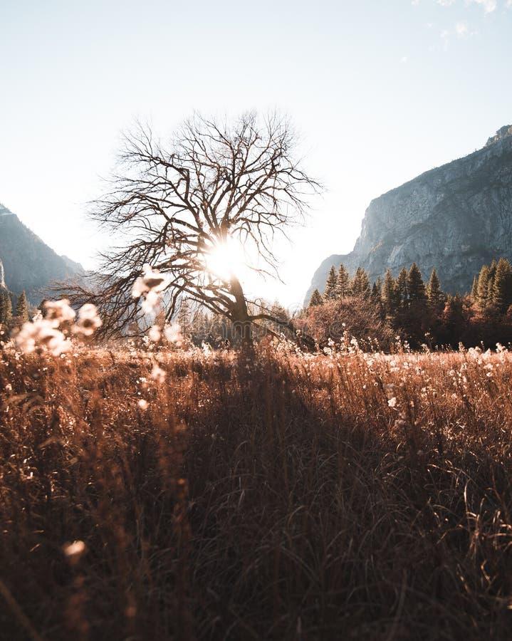 Fånga de sista bitarna av solen skina till och med ett träd arkivfoton