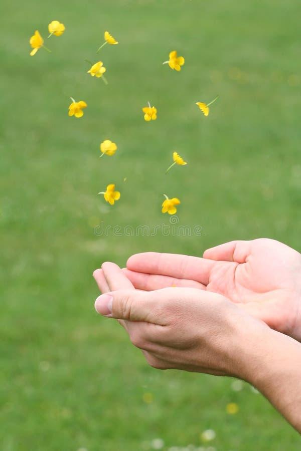 fånga för blomningar arkivbild