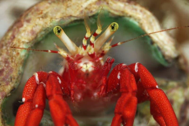 fånga krabbor enslingen royaltyfria bilder