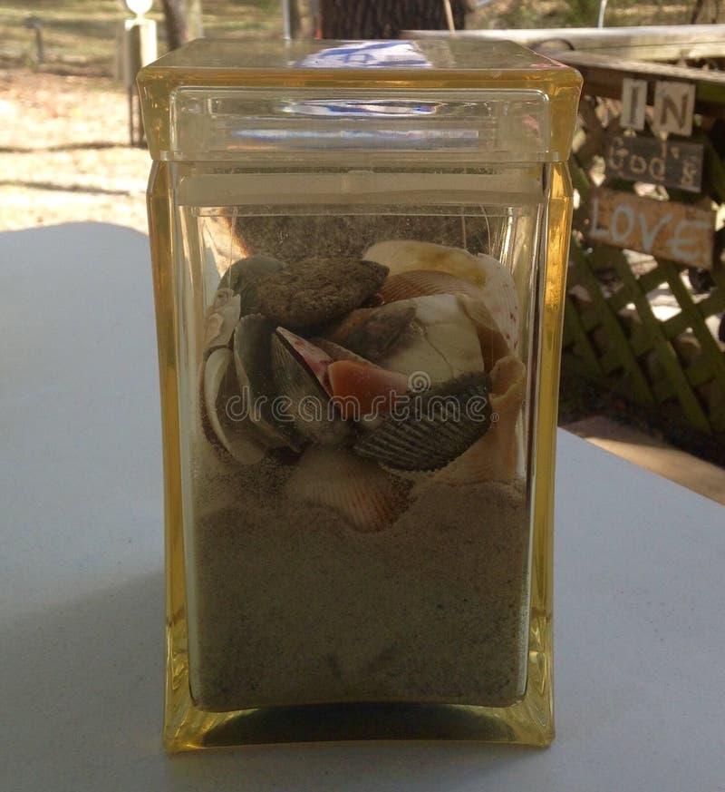 Fångade snäckskal och från Atlanticet Ocean royaltyfri fotografi
