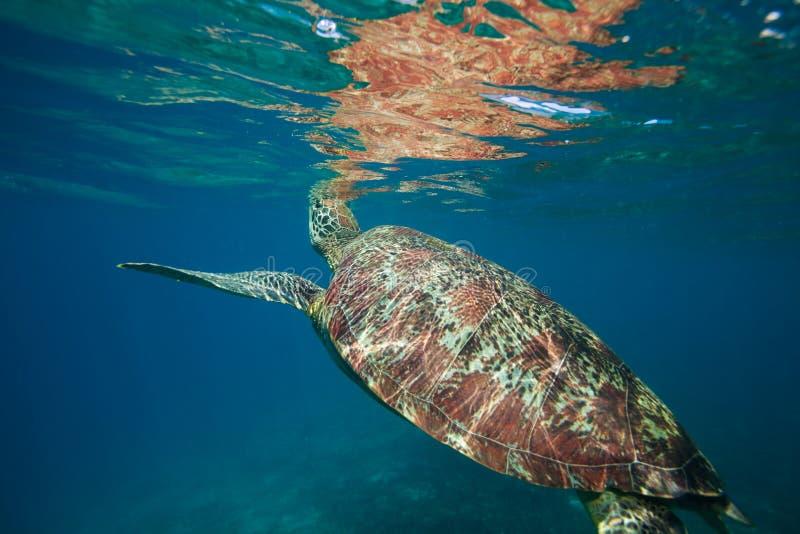 fångande havsyttersida för luft fotografering för bildbyråer