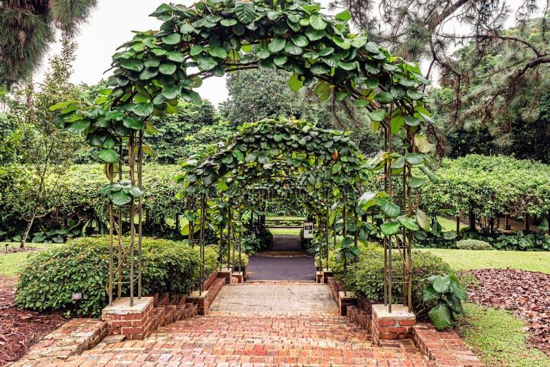 Fånge av krigtegelstenmoment i Singapore botaniska trädgårdar royaltyfri fotografi