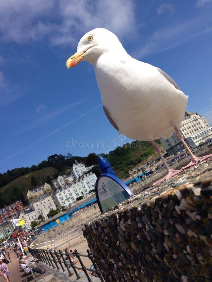 Fånget slut Seagull på stranden arkivbilder