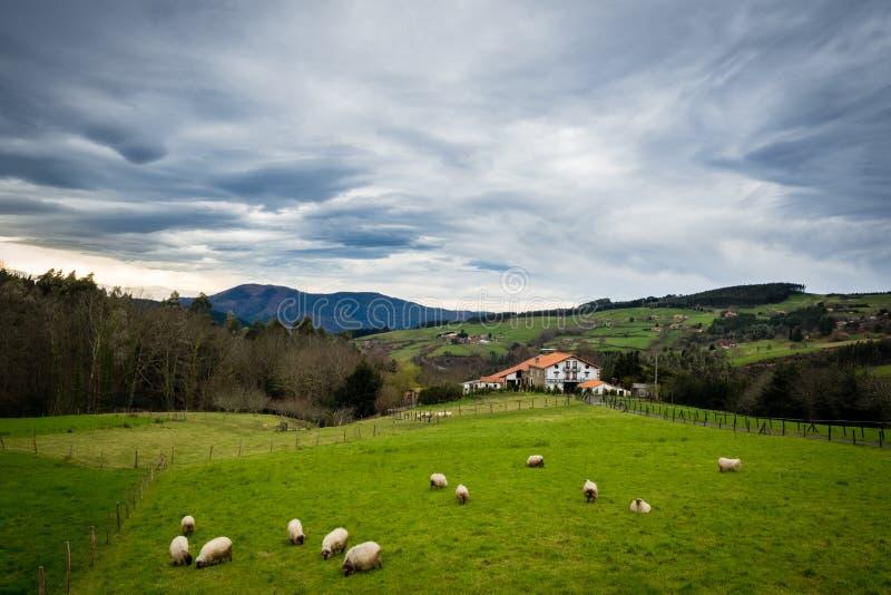 Får flockas och ett berghus i det baskiska landet royaltyfri bild