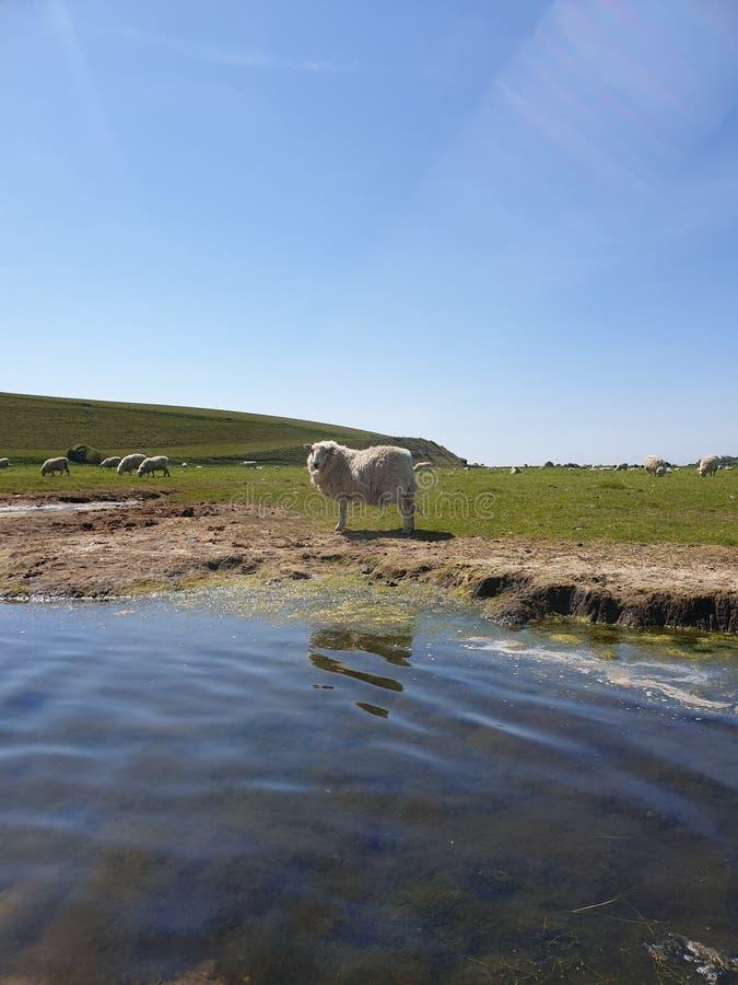 Får solsken på för den Cuckmere floden, East Sussex royaltyfri bild