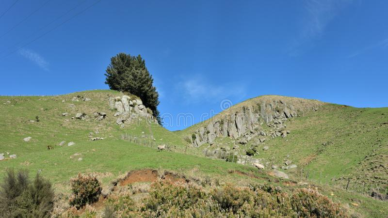 Får som betar på lutningarna av en grön stenig kulle royaltyfri foto