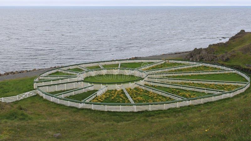 Får som samlas staketet Iceland royaltyfri foto