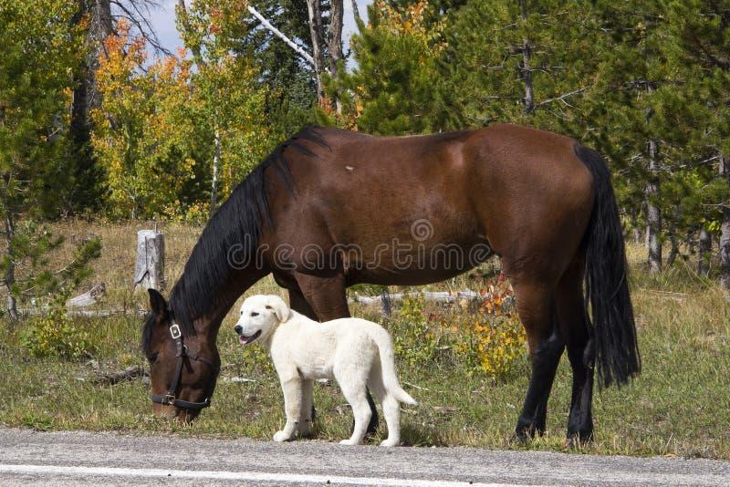 Fårherders hund och häst royaltyfri foto